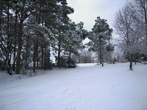 a part of the yard looking really white
