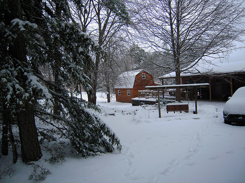 our yard from the top of the driveway