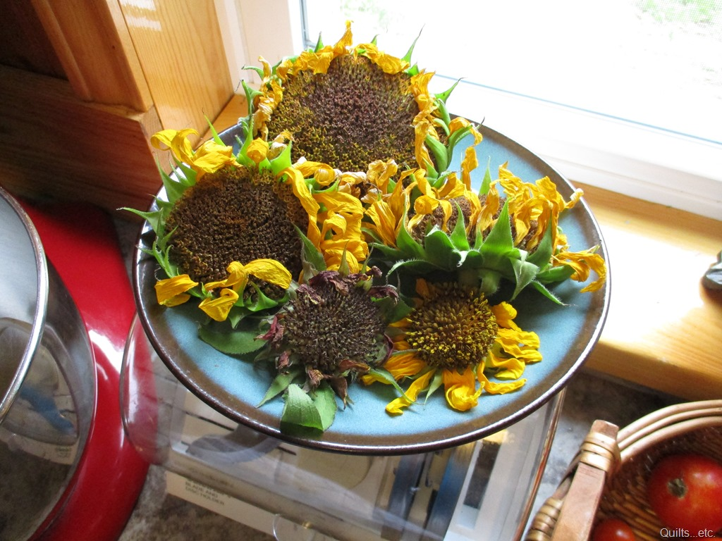sunflower heads to dry